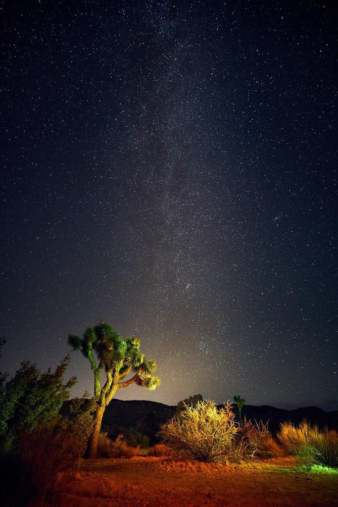 Joshua Tree by Night